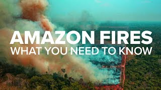 Amazon Rainforest Fires - What you need to know