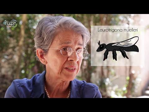 Desvendando o genoma das abelhas