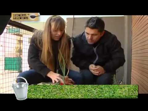 Cuidado de cultivos, puerro (capítulo 21)