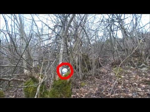 СТРАННОЕ СУЩЕСТВО НАПУГАЛО ЛЕСНИКА странное существо в лесу. странные существа снятые на камеру