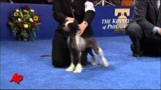 John O'Hurley hosts The National Dog Show