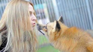 THE FOX RESCUER! Lady who rescues dozens of foxes
