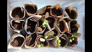 Youtube thumbnail for Clever tips for planting seedlings