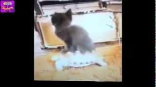 Приколы! Лучшая подборка смешных ситуаций с котами, февраль 2014 ! Часть 1 Funny Pets Compilation