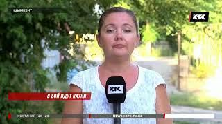 «Чёрная вдова» отправила на больничные койки 26 жителей Шымкента