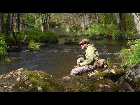 Trout in the Riffles