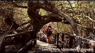 preview picture of video 'Paseo y snorkel en Concha Perla'