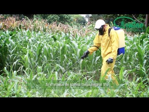 Parazita tisztító módszerek áttekintése