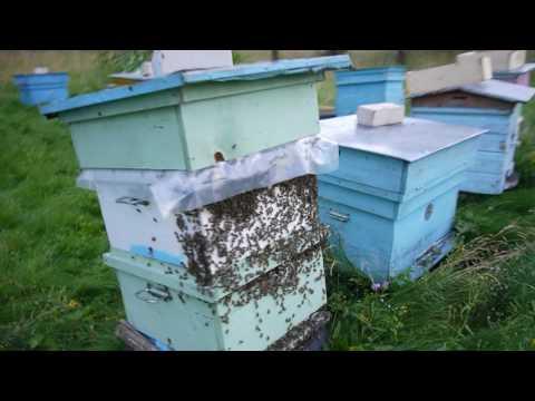 Откачка меда 2017. Несколько дней из жизни пчеловода. Пора качать мед.