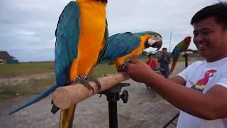 Free Flight Macaws Adventure