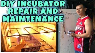 DIY INCUBATOR UPDATE
