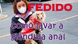O que é Glândula Adanal em Cães e como espremer e lavar #petcarol #torodepalpite