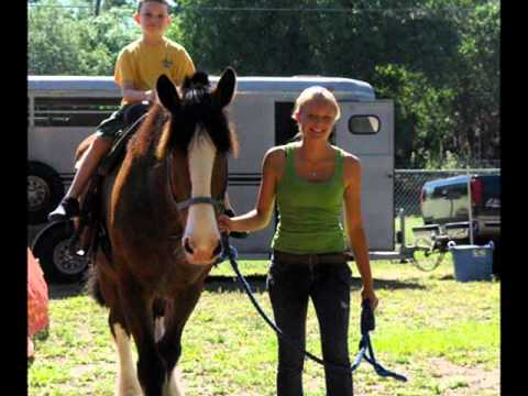 Help 5 Rescued Horses Become Therapy Animals