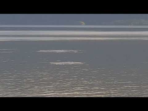 Baluga whales can sometimes be seen on the drive down from Anchorage to Gwins Lodge in Cooper Landing.  This is perhaps near mile 105 approximately. The whales follow the fish up during high tide. Bare and dangerous silt bottom will be exposed during low tide. Do not walk out on as you  can sink in and not get out before the tide comes back in rapidly.