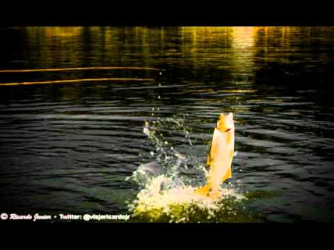 Música A Viola e a Pescaria