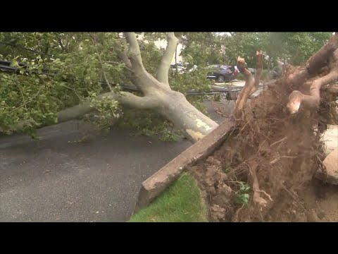 Wind downs trees, power lines on Long Island