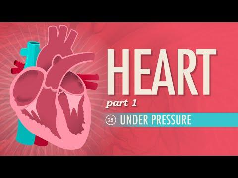 The Heart, part 1 - Under Pressure: Crash Course A&P #25