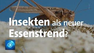 """Essbare Insekten, neue Verpackungen und Plastikfreiheit: Die Trends der Lebensmittelmesse """"Anuga"""""""