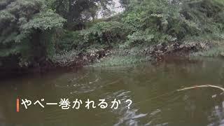 【バス釣り】トップウオーターバスフィッシング(フローター) 2018 10 将監川