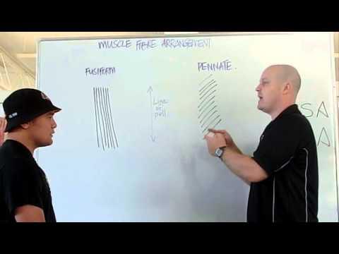 Lensemble des exercices sur tous les groupes des muscles dans la salle de sport des hommes