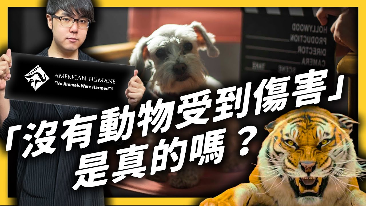 影片結尾常見的「沒有動物受到傷害 」,其實有經過專業認證?但這認證又未必可信?|志祺七七