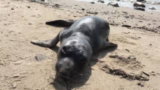 An Encounter With A Friendly Seal Pup