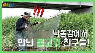 [교육] 낙동강에서 만난 물고기 친구들! - 낙동강 어류채집
