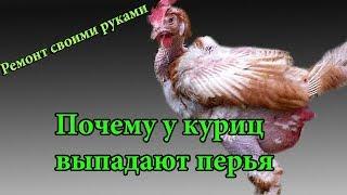 Картинки курица клюет