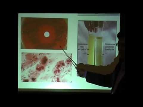 Biene Podmore und Behandlung von Prostatitis