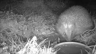 Wildlife Trail Camera - 2.1.2019