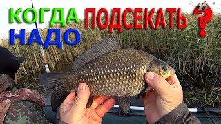 Что такое подсечка в рыбалке