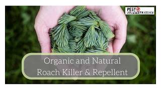 Organic and Natural Roach Killer and Repellent