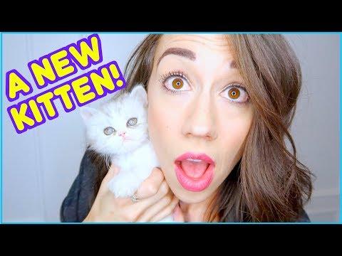 MEET MY NEW KITTEN!