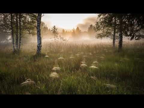 Пение сверчков, стрикотание цикад и кузнечиков 5 часов звуков природы