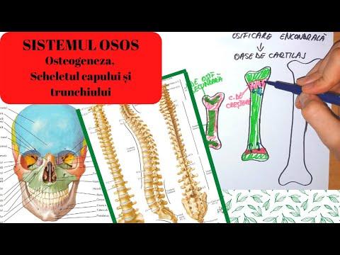 Articulația osteochondrozei