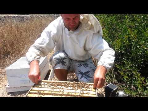 пчеловодство. мой первый рой 8 часть. осмотр.