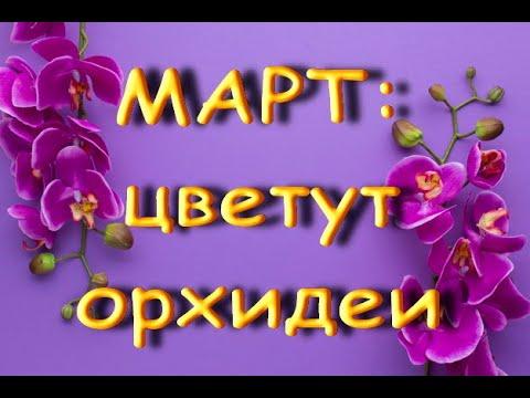 КРАСИВЕЙШИЕ орхидеи,ЦВЕТУЩИЕ в МАРТЕ.Пелоричность.Спонтанная мутация.Что цветет в марте.