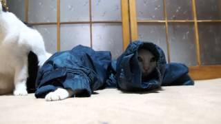 Смотреть онлайн Лучший домик для кошки - рукав куртки