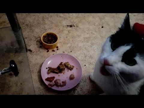 Gemischter Fisch-Fleischteller für Kitty.. 🐈