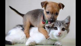 Лучшие приколы про собак и кошек | Подборка видео приколов про милых котиков и собак
