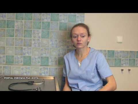 Nootropowe w osteochondroza kręgosłupa szyjnego