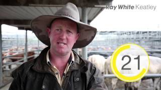 Mount Gambier Cattle Market SNAPSHOT - 24th Feb 2016