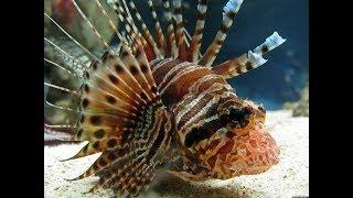 Морская рыба средиземного моря