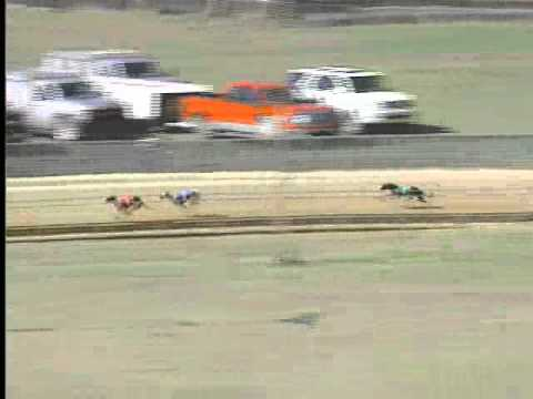 BestBet Jax Greyhound Racing Flite I