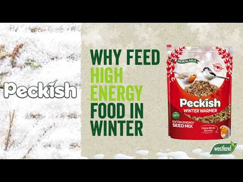 Peckish Winter Warmer Suet Cake Video