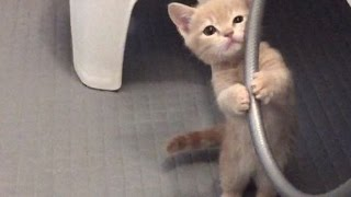 激カワ子猫の日常…「破壊力」がスゴい