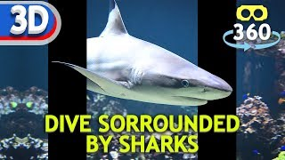 Dive Surrounded by Sharks #VR180 #3D #8K #VirtualReality #HDR #360Video #VR #360