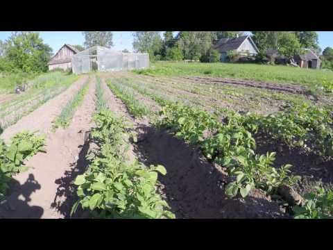 Различные способы окучивания картофеля - мото ЛАПЛОШ ™