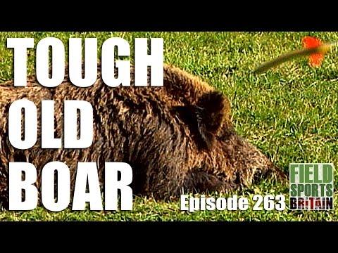 Fieldsports Britain – Tough Old Boar