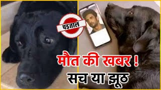 Sushant Singh Rajput's Dog Fudge's Is Death | Know Real Truth..!
